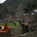 Caltrans files lawsuit against damaged vegetation