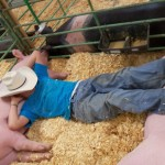 Nevada County Fair Schedules Livestock Meeting