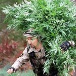 More Marijuana Raids
