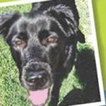 Animal Abuser Pleads No Contest