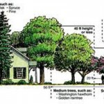 Think Before You Plant Your Arbor Day Trees
