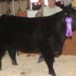 Register to Show Market Beef at Fair