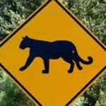 Local Mountain Lion Spotted on Banner