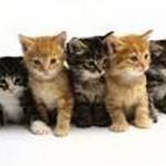 Kitten Foster Homes Needed