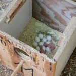 Nesting Boxes Available Through Resouce Conservation District