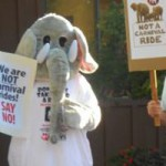Groups Protest Elephant Rides