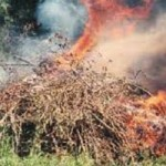 Call for Permit Burn Days