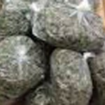 Truckee CHP Nab More Out-of State Pot Transporters