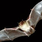 Nevada County Resource Conservation District Bat Workshop TONIGHT
