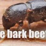 B-L-M Establishes Bark Beetle Task Force