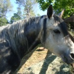 Animal Shelter Horses for Adoption