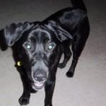 Dog's death at Auburn animal shelter spurs lawsuit