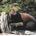 Public Land poisons Endanger Wildlife