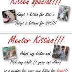 Special Deal for Cats and Kittens