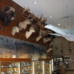 Sierra College Museum Tours Begin Saturday