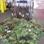Clover Valley Marijuana and Guns Arrest