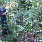 Marijuana Grower Faces Fish and Wildlife Code Violations