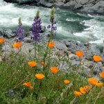 Wildflower Walks Begin This Weekend Bridgeport