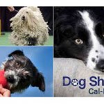 Big Sacramento Dog Show at Cal Expo