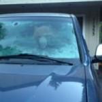Bear Breakin in Truckee