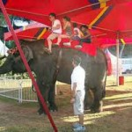 Elephants or No Elephants at the Fair