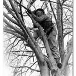 Up a Tree…