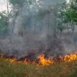 Wind Cancels Forest Service Prescribed Burn