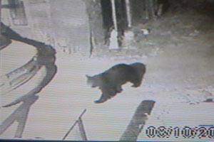 navo_bear2