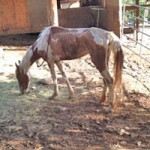 Charges Pending in Animal Abuse Case