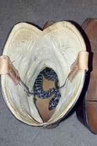 snake-in-boot