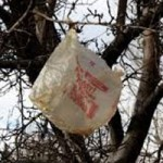 Shoppers Getting Used to Plastic Bag Ban