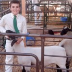 Livestock Auction a Success