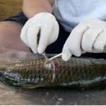 The Sierra Fund Sampling Fish For Health