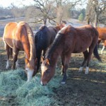 41 Horses Rescued from South County Property
