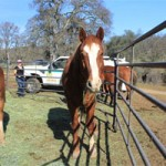 Lacy J Dalton Concert to Benefit Rescued Horses
