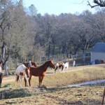 No More Equine Coronavirus Found In Penn Valley