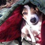 Nevada County Pets of the Homeless