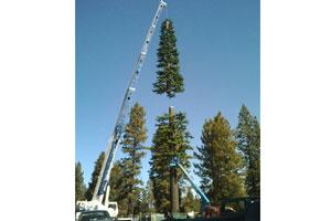 Pine-Construction