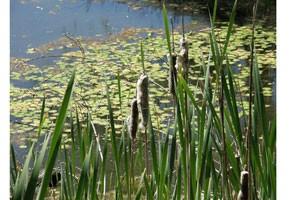 Pond-image