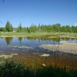 Conservation District Offers Free Pond Management Visits