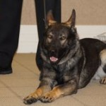 NCPD New Canine Officer Sworn In