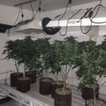 Indoor Marijuana Grows Uncovered in South County