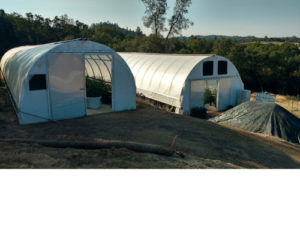 Marijuana-Hoop-House-3