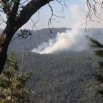 Grizzly Fire
