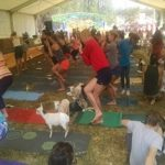 Fairgoers Enjoy 'Goat Yoga'