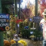 Nevada City Kids Make Scarecrows For Charity
