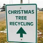 Christmas Tree Recycling Underway Until February