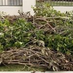 Green Waste Program Proving Popular Again