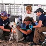 Animal Evac Shelters Hundreds of Animals
