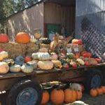 End of Pumpkin Patch Season